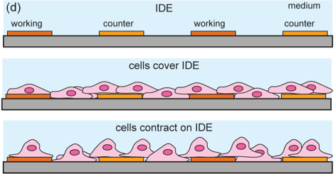 ichip_tissue_research2.png